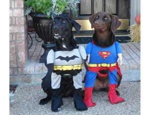 12-funny-dog-costumes-halloween-superheroes-af